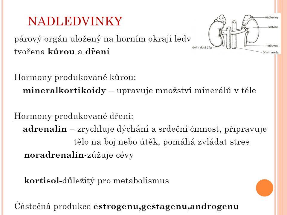 NADLEDVINKY párový orgán uložený na horním okraji ledvin tvořena kůrou a dření Hormony produkované kůrou: mineralkortikoidy – upravuje množství minerálů v těle Hormony produkované dření: adrenalin – zrychluje dýchání a srdeční činnost, připravuje tělo na boj nebo útěk, pomáhá zvládat stres noradrenalin -zúžuje cévy kortisol- důležitý pro metabolismus Částečná produkce estrogenu,gestagenu,androgenu