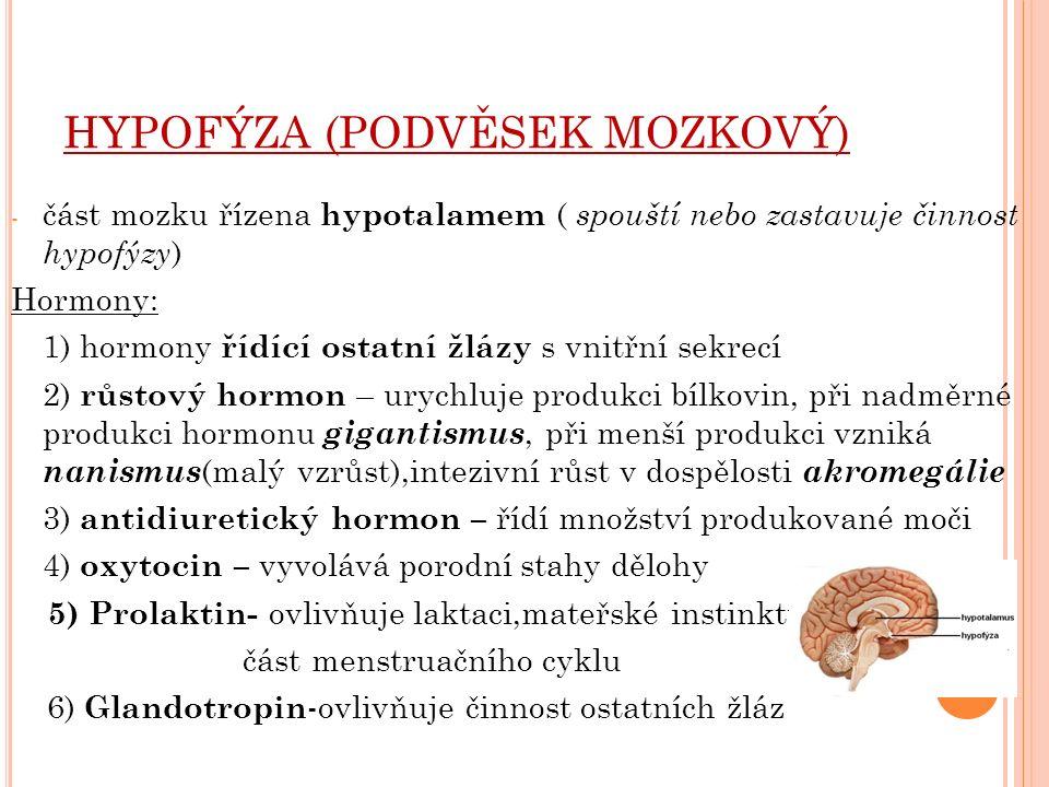 HYPOFÝZA (PODVĚSEK MOZKOVÝ) - část mozku řízena hypotalamem ( spouští nebo zastavuje činnost hypofýzy ) Hormony: 1) hormony řídící ostatní žlázy s vnitřní sekrecí 2) růstový hormon – urychluje produkci bílkovin, při nadměrné produkci hormonu gigantismus, při menší produkci vzniká nanismus (malý vzrůst),intezivní růst v dospělosti akromegálie 3) antidiuretický hormon – řídí množství produkované moči 4) oxytocin – vyvolává porodní stahy dělohy 5) Prolaktin- ovlivňuje laktaci,mateřské instinktu, část menstruačního cyklu 6) Glandotropin -ovlivňuje činnost ostatních žláz