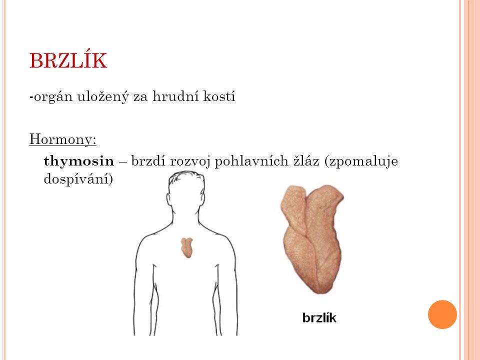 BRZLÍK -orgán uložený za hrudní kostí Hormony: thymosin – brzdí rozvoj pohlavních žláz (zpomaluje dospívání)