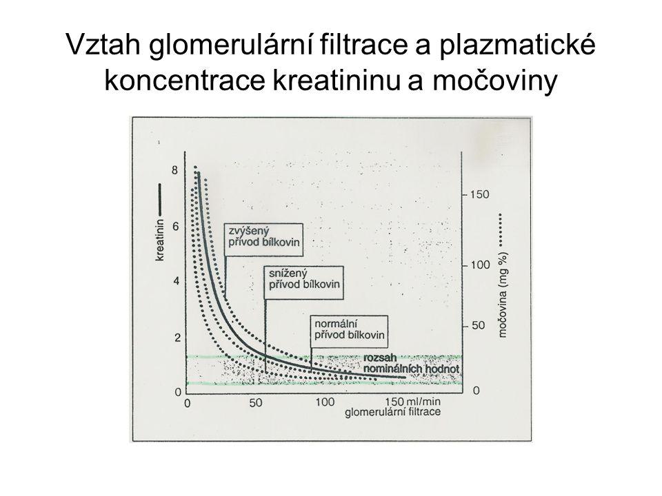 Vztah glomerulární filtrace a plazmatické koncentrace kreatininu a močoviny
