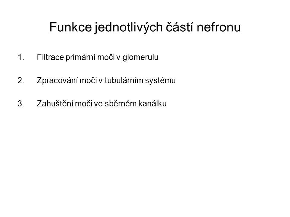 Funkce jednotlivých částí nefronu 1.Filtrace primární moči v glomerulu 2.Zpracování moči v tubulárním systému 3.Zahuštění moči ve sběrném kanálku