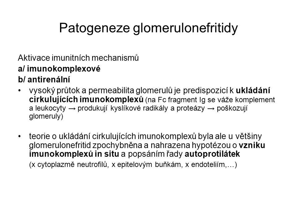 Patogeneze glomerulonefritidy Aktivace imunitních mechanismů a/ imunokomplexové b/ antirenální vysoký průtok a permeabilita glomerulů je predispozicí k ukládání cirkulujících imunokomplexů (na Fc fragment Ig se váže komplement a leukocyty → produkují kyslíkové radikály a proteázy → poškozují glomeruly) teorie o ukládání cirkulujících imunokomplexů byla ale u většiny glomerulonefritid zpochybněna a nahrazena hypotézou o vzniku imunokomplexů in situ a popsáním řady autoprotilátek (x cytoplazmě neutrofilů, x epitelovým buňkám, x endoteliím,…)