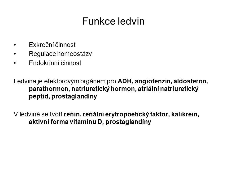 Funkce ledvin Exkreční činnost Regulace homeostázy Endokrinní činnost Ledvina je efektorovým orgánem pro ADH, angiotenzin, aldosteron, parathormon, natriuretický hormon, atriální natriuretický peptid, prostaglandíny V ledvině se tvoří renin, renální erytropoetický faktor, kalikrein, aktivní forma vitamínu D, prostaglandíny