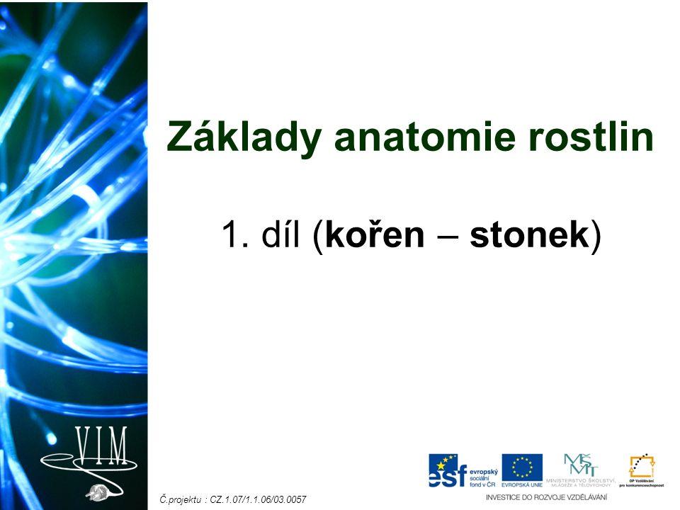 Č.projektu : CZ.1.07/1.1.06/03.0057 Základy anatomie rostlin 1. díl (kořen – stonek)