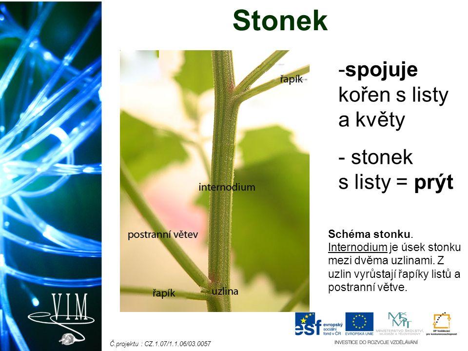 Č.projektu : CZ.1.07/1.1.06/03.0057 Stonek -spojuje kořen s listy a květy - stonek s listy = prýt Schéma stonku.