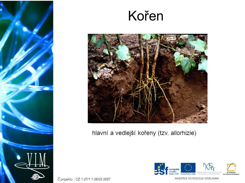Č.projektu : CZ.1.07/1.1.06/03.0057 Kořen Funkce: fixuje rostlinu v půdě čerpá živiny (rozpuštěné min.
