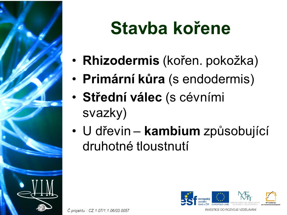 Č.projektu : CZ.1.07/1.1.06/03.0057 Stavba kořene Rhizodermis (kořen.