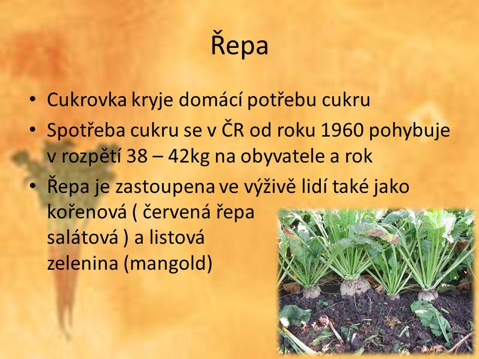 Řepa Cukrovka kryje domácí potřebu cukru Spotřeba cukru se v ČR od roku 1960 pohybuje v rozpětí 38 – 42kg na obyvatele a rok Řepa je zastoupena ve výživě lidí také jako kořenová ( červená řepa salátová ) a listová zelenina (mangold)