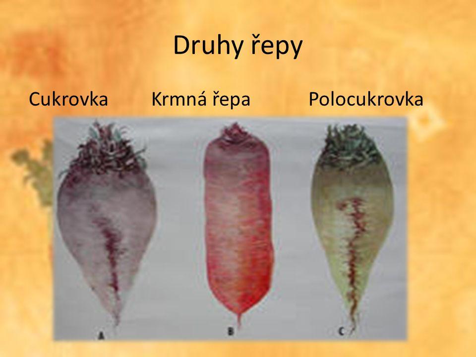 Brambory Roční spotřeba brambor se v ČR pohybuje kolem 80kg na osobu a rok Ve stále větším množství budou spotřebitelé zásobováni výrobky z brambor (smažené, sušené, mražené a sterilované)