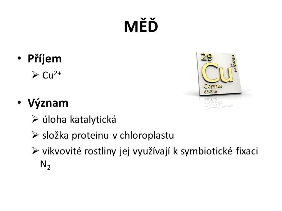 MĚĎ Příjem  Cu 2+ Význam  úloha katalytická  složka proteinu v chloroplastu  vikvovité rostliny jej využívají k symbiotické fixaci N 2