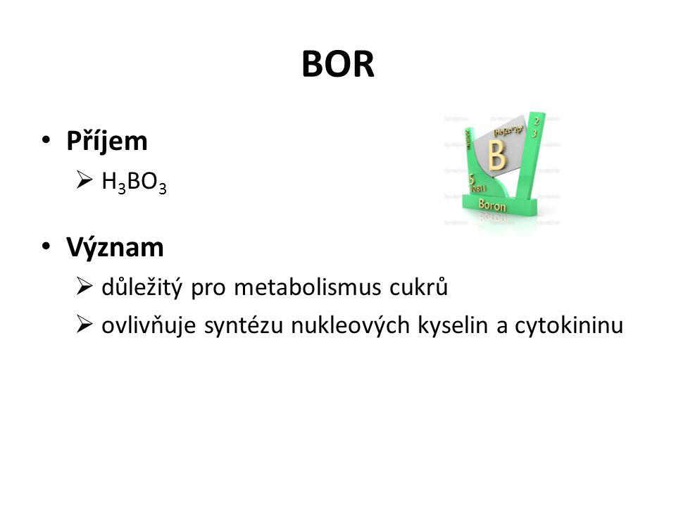 BOR Příjem  H 3 BO 3 Význam  důležitý pro metabolismus cukrů  ovlivňuje syntézu nukleových kyselin a cytokininu