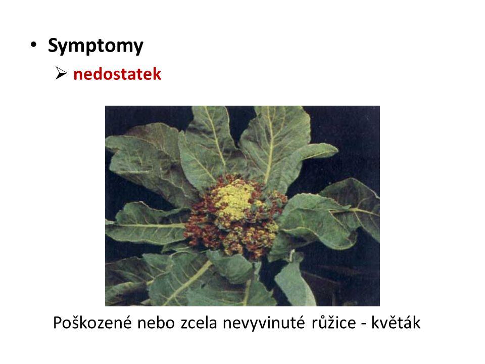 Symptomy  nedostatek Poškozené nebo zcela nevyvinuté růžice - květák