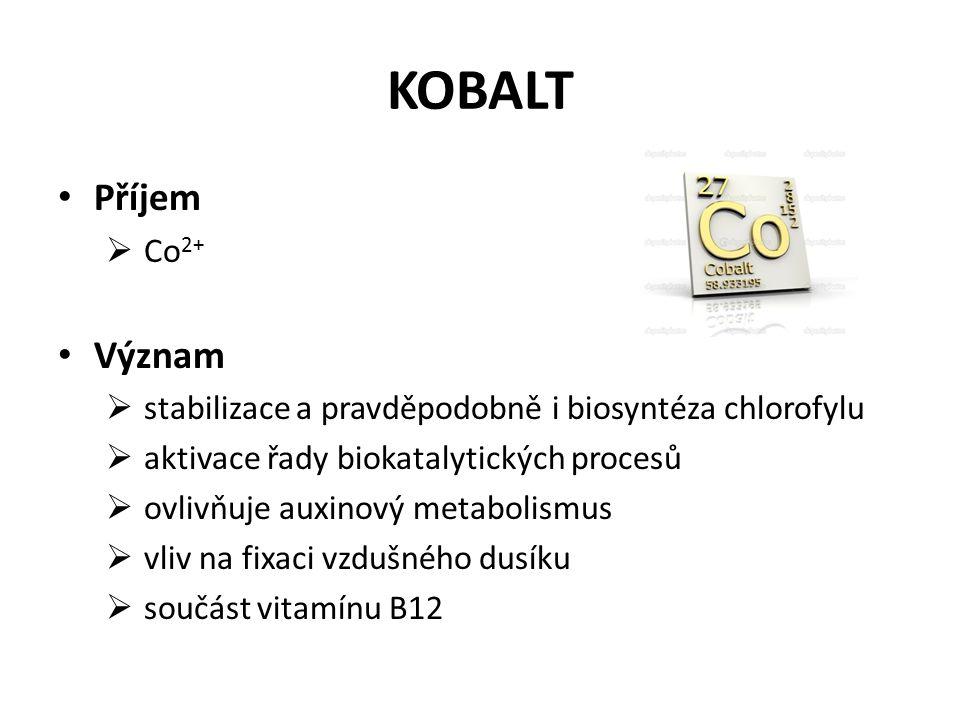 KOBALT Příjem  Co 2+ Význam  stabilizace a pravděpodobně i biosyntéza chlorofylu  aktivace řady biokatalytických procesů  ovlivňuje auxinový metabolismus  vliv na fixaci vzdušného dusíku  součást vitamínu B12