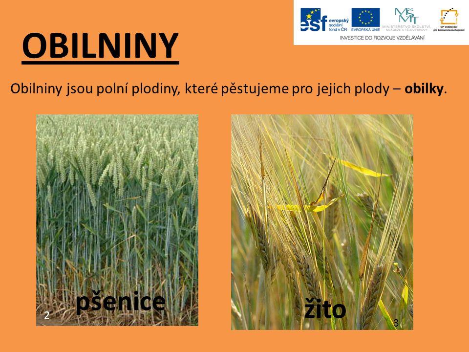 OBILNINY Obilniny jsou polní plodiny, které pěstujeme pro jejich plody – obilky. 2 pšenice 3 žito