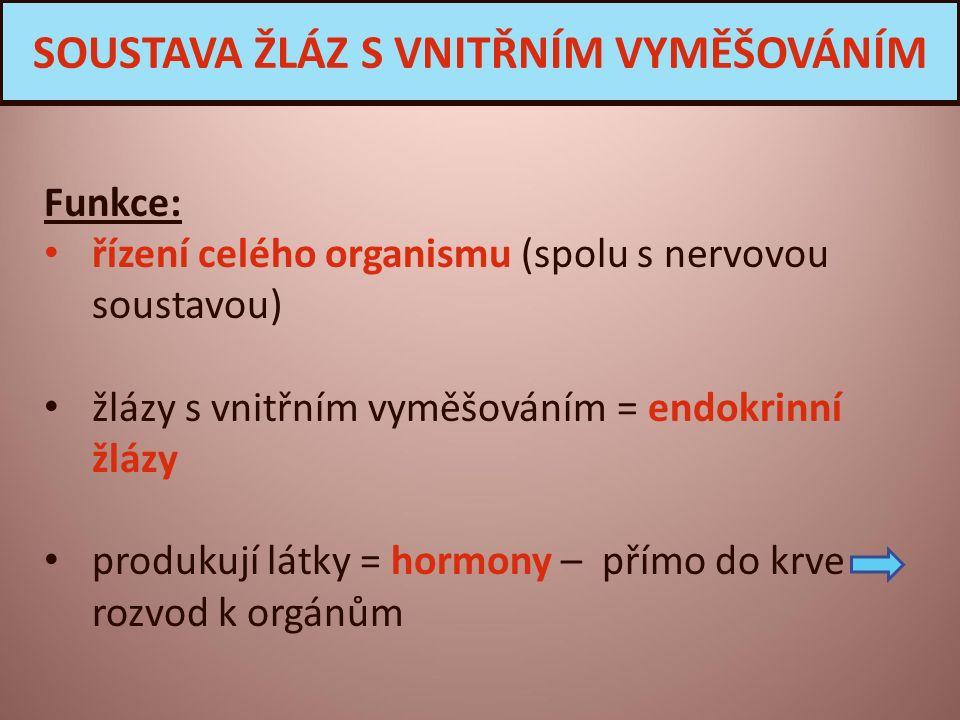 Funkce: řízení celého organismu (spolu s nervovou soustavou) žlázy s vnitřním vyměšováním = endokrinní žlázy produkují látky = hormony – přímo do krve rozvod k orgánům SOUSTAVA ŽLÁZ S VNITŘNÍM VYMĚŠOVÁNÍM