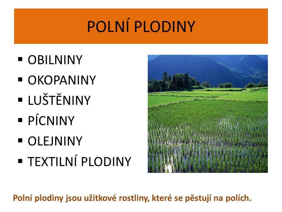 POLNÍ PLODINY  OBILNINY  OKOPANINY  LUŠTĚNINY  PÍCNINY  OLEJNINY  TEXTILNÍ PLODINY Polní plodiny jsou užitkové rostliny, které se pěstují na polích.