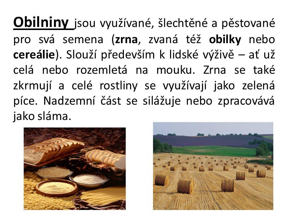 Obilniny jsou využívané, šlechtěné a pěstované pro svá semena (zrna, zvaná též obilky nebo cereálie).