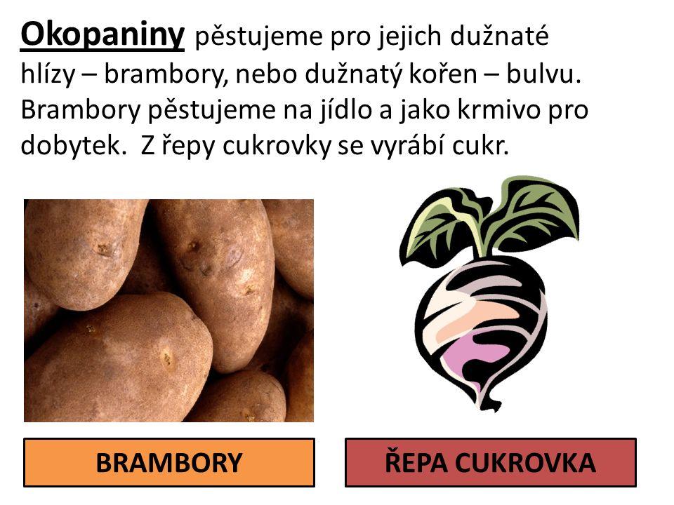 Okopaniny pěstujeme pro jejich dužnaté hlízy – brambory, nebo dužnatý kořen – bulvu.