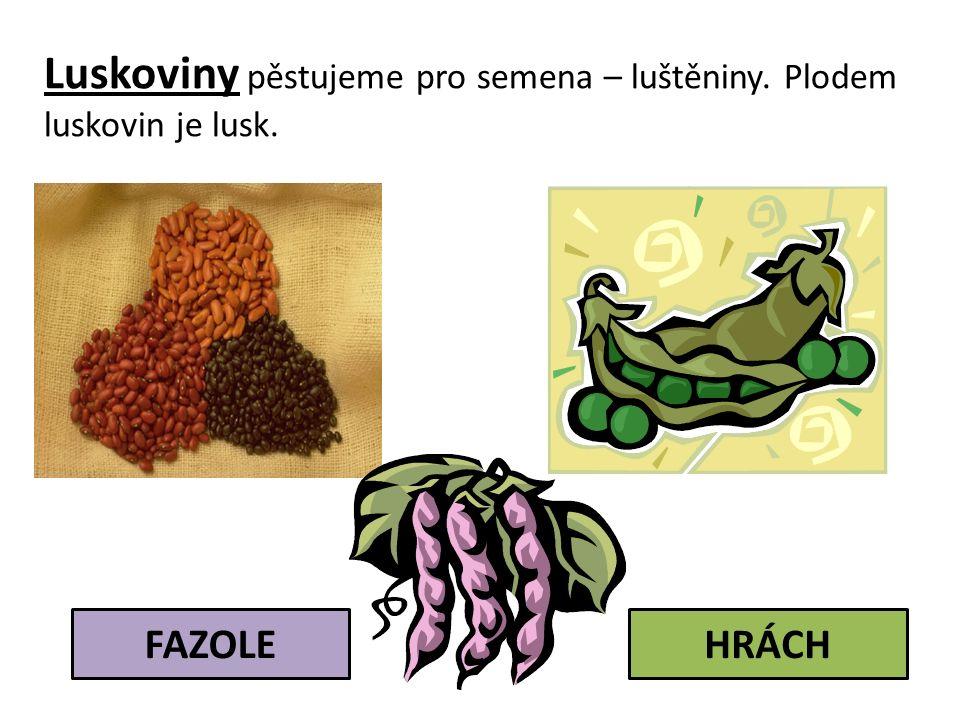Luskoviny pěstujeme pro semena – luštěniny. Plodem luskovin je lusk. FAZOLEHRÁCH