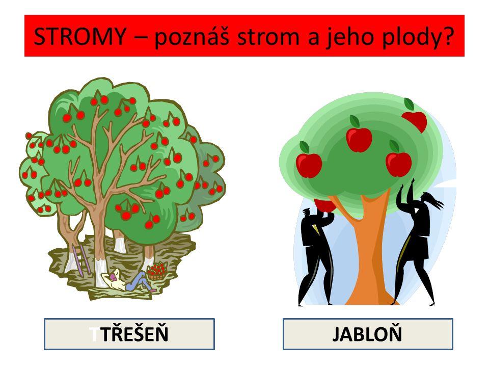 STROMY – poznáš strom a jeho plody TTŘEŠEŇJABLOŇ