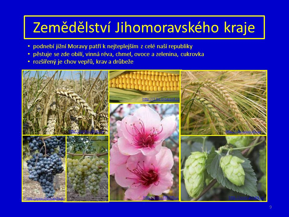 Zemědělství Jihomoravského kraje podnebí jižní Moravy patří k nejteplejším z celé naší republiky pěstuje se zde obilí, vinná réva, chmel, ovoce a zele