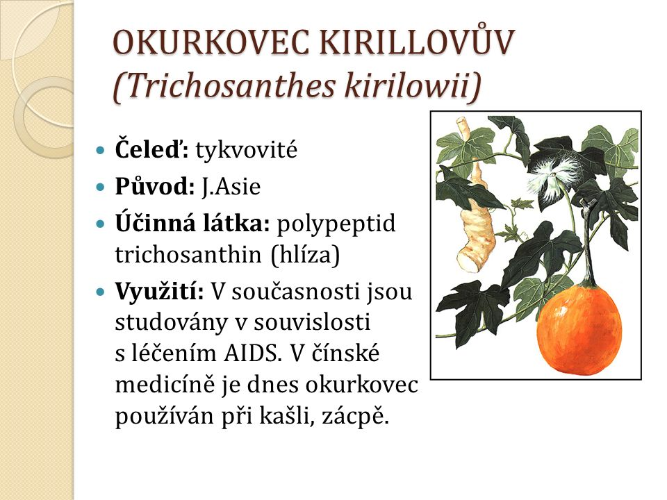 OKURKOVEC KIRILLOVŮV (Trichosanthes kirilowii) Čeleď: tykvovité Původ: J.Asie Účinná látka: polypeptid trichosanthin (hlíza) Využití: V současnosti jsou studovány v souvislosti s léčením AIDS.