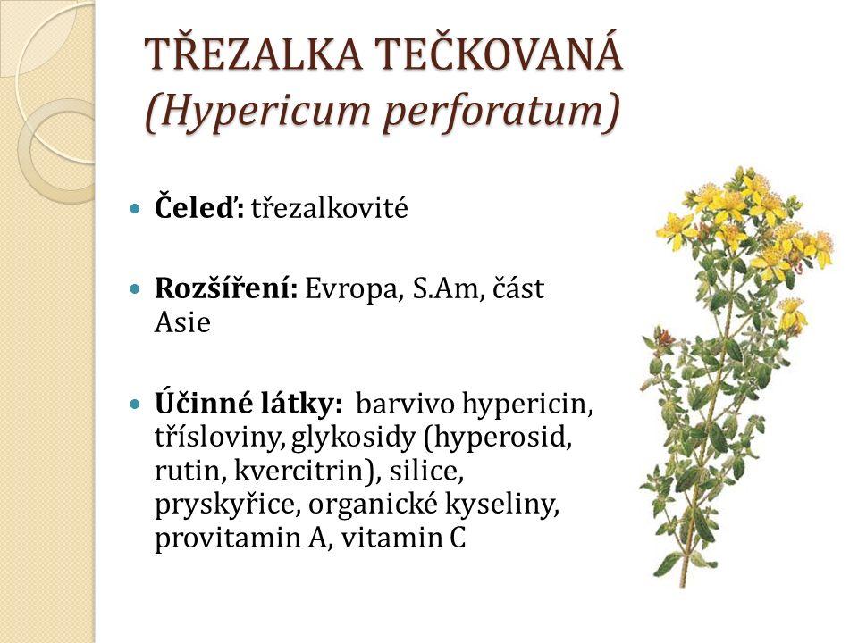 TŘEZALKA TEČKOVANÁ (Hypericum perforatum) Čeleď: třezalkovité Rozšíření: Evropa, S.Am, část Asie Účinné látky: barvivo hypericin, třísloviny, glykosidy (hyperosid, rutin, kvercitrin), silice, pryskyřice, organické kyseliny, provitamin A, vitamin C
