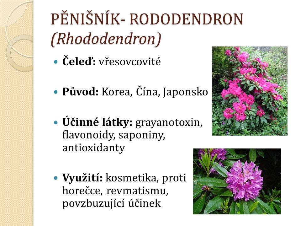 PĚNIŠNÍK- RODODENDRON (Rhododendron) Čeleď: vřesovcovité Původ: Korea, Čína, Japonsko Účinné látky: grayanotoxin, flavonoidy, saponiny, antioxidanty Využití: kosmetika, proti horečce, revmatismu, povzbuzující účinek