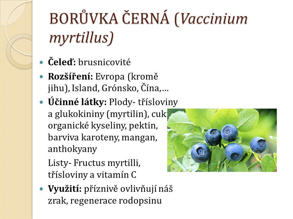 BORŮVKA ČERNÁ (Vaccinium myrtillus) Čeleď: brusnicovité Rozšíření: Evropa (kromě jihu), Island, Grónsko, Čína,… Účinné látky: Plody- třísloviny a glukokininy (myrtilin), cukry, organické kyseliny, pektin, barviva karoteny, mangan, anthokyany Listy- Fructus myrtilli, třísloviny a vitamín C Využití: příznivě ovlivňují náš zrak, regenerace rodopsinu