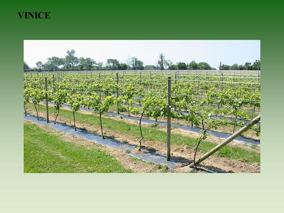 Na vysočinách je půda méně úrodná, až kamenitá. Pěstují se zde brambory, len a oves.