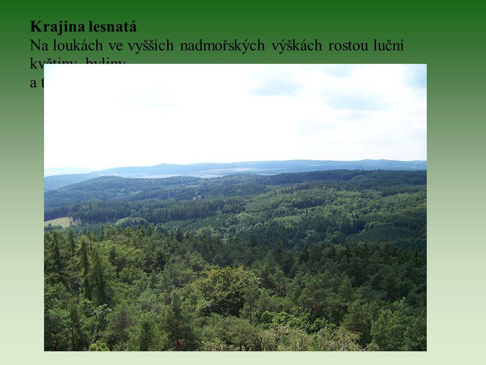 Krajina lesnatá Na loukách ve vyšších nadmořských výškách rostou luční květiny, byliny a traviny. Krajina je zde převážně zalesněná.