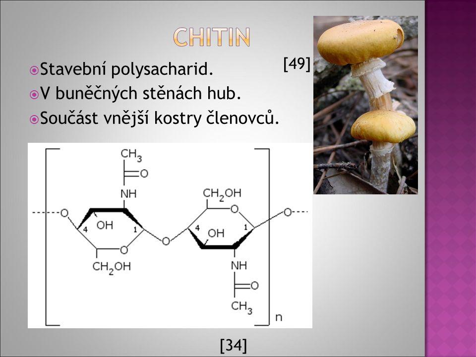  Stavební polysacharid.  V buněčných stěnách hub.  Součást vnější kostry členovců. [34] [49]