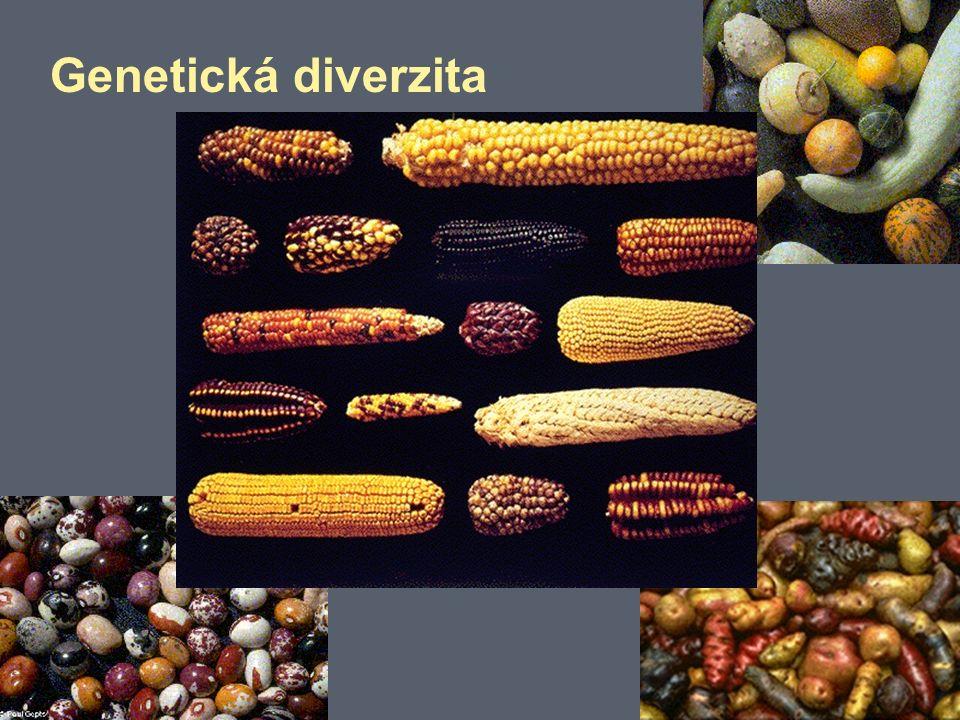 Genetická diverzita