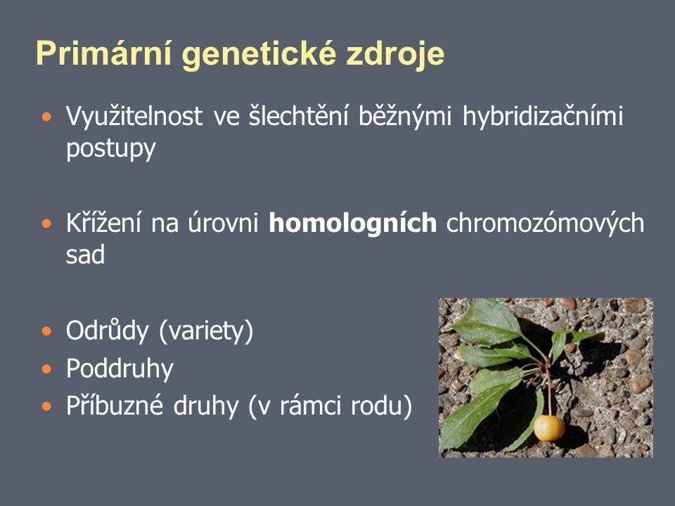 Primární genetické zdroje Využitelnost ve šlechtění běžnými hybridizačními postupy Křížení na úrovni homologních chromozómových sad Odrůdy (variety) Poddruhy Příbuzné druhy (v rámci rodu)