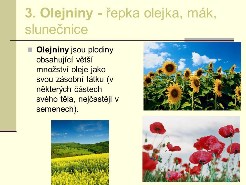 3. Olejniny - řepka olejka, mák, slunečnice Olejniny jsou plodiny obsahující větší množství oleje jako svou zásobní látku (v některých částech svého t