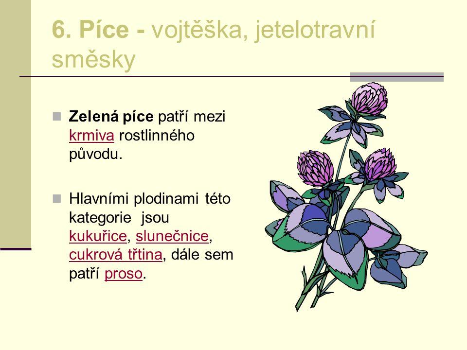 6. Píce - vojtěška, jetelotravní směsky Zelená píce patří mezi krmiva rostlinného původu. krmiva Hlavními plodinami této kategorie jsou kukuřice, slun