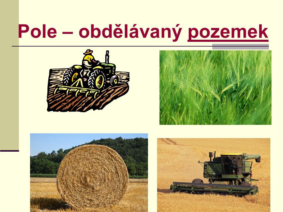 Pole – obdělávaný pozemekpozemek