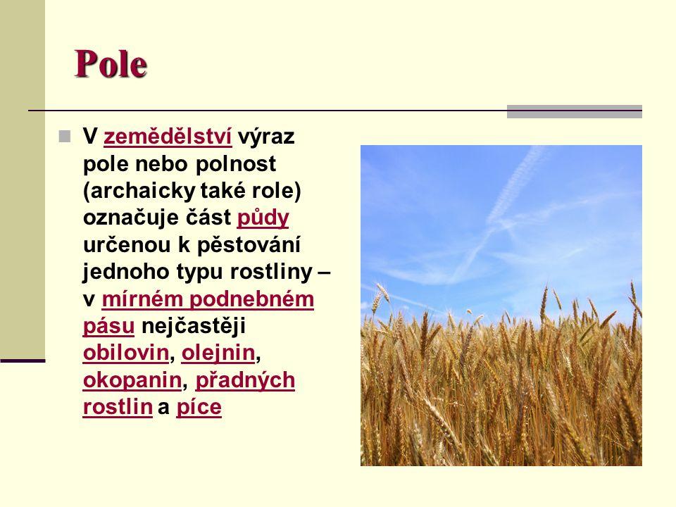 Pole V zemědělství výraz pole nebo polnost (archaicky také role) označuje část půdy určenou k pěstování jednoho typu rostliny – v mírném podnebném pásu nejčastěji obilovin, olejnin, okopanin, přadných rostlin a pícezemědělstvípůdymírném podnebném pásu obilovinolejnin okopaninpřadných rostlinpíce