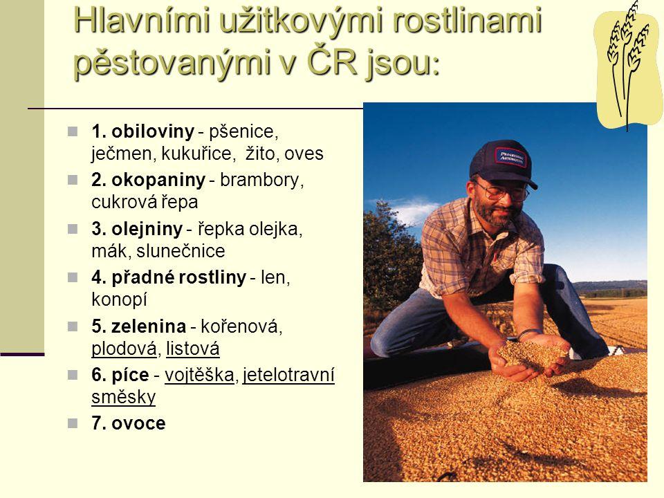Hlavními užitkovými rostlinami pěstovanými v ČR jsou : 1. obiloviny - pšenice, ječmen, kukuřice, žito, oves 2. okopaniny - brambory, cukrová řepa 3. o