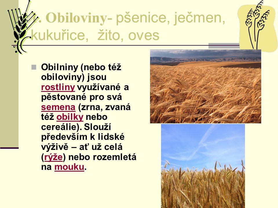 1. Obiloviny- pšenice, ječmen, kukuřice, žito, oves Obilniny (nebo též obiloviny) jsou rostliny využívané a pěstované pro svá semena (zrna, zvaná též
