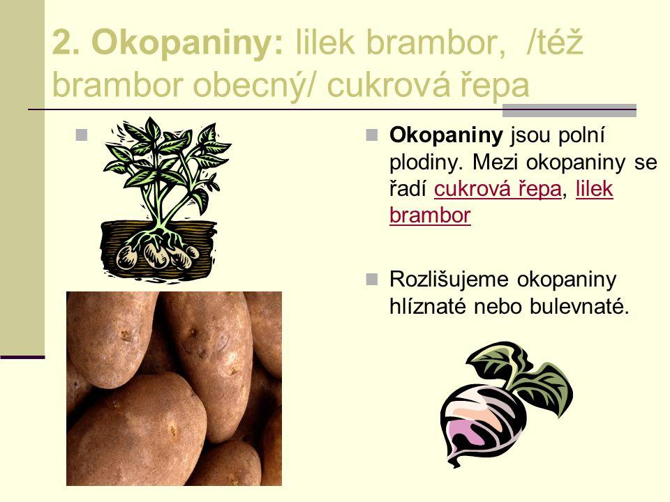 2. Okopaniny: lilek brambor, /též brambor obecný/ cukrová řepa Okopaniny jsou polní plodiny. Mezi okopaniny se řadí cukrová řepa, lilek bramborcukrová