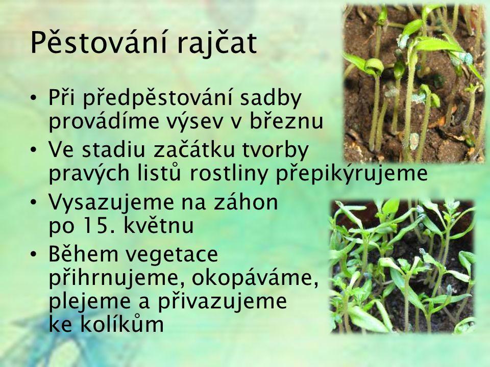 Pěstování rajčat Při předpěstování sadby provádíme výsev v březnu Ve stadiu začátku tvorby pravých listů rostliny přepikýrujeme Vysazujeme na záhon po