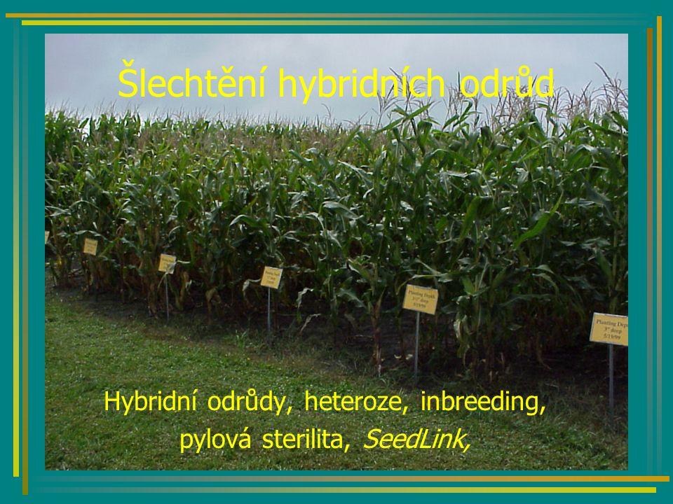Šlechtění hybridních odrůd Hybridní odrůdy, heteroze, inbreeding, pylová sterilita, SeedLink,