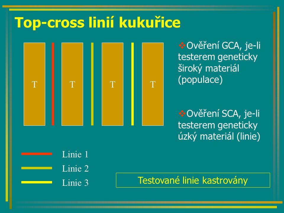 Top-cross linií kukuřice TTTT  Ověření GCA, je-li testerem geneticky široký materiál (populace)  Ověření SCA, je-li testerem geneticky úzký materiál (linie) Linie 1 Linie 2 Linie 3 Testované linie kastrovány