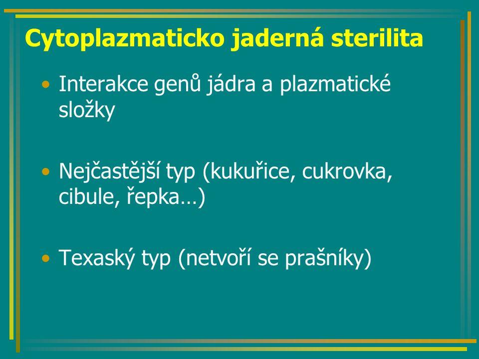 Cytoplazmaticko jaderná sterilita Interakce genů jádra a plazmatické složky Nejčastější typ (kukuřice, cukrovka, cibule, řepka…) Texaský typ (netvoří