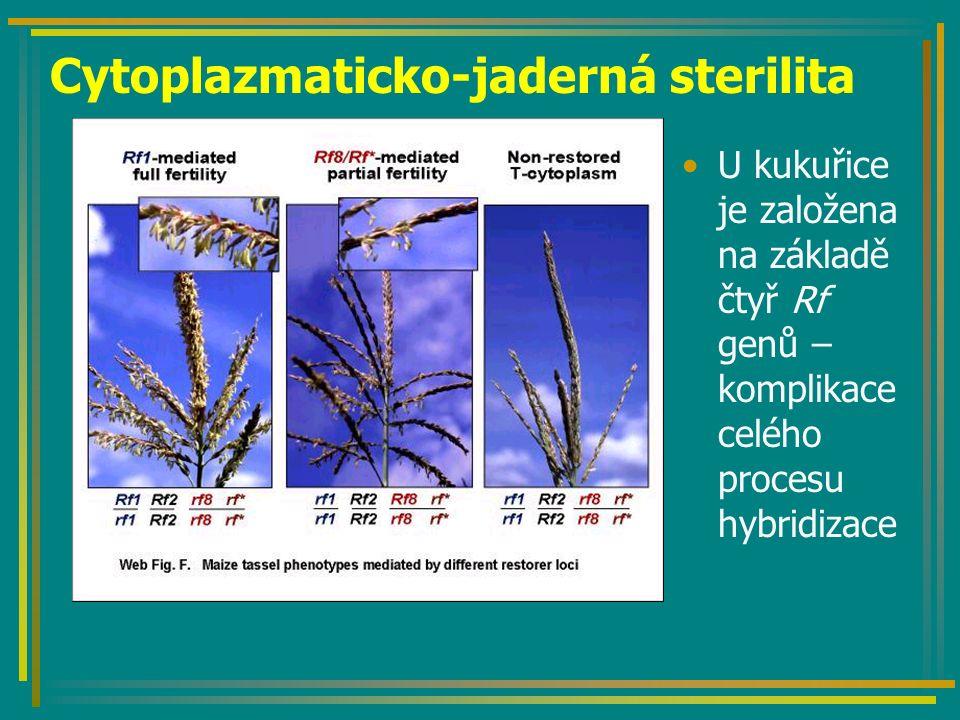 Cytoplazmaticko-jaderná sterilita U kukuřice je založena na základě čtyř Rf genů – komplikace celého procesu hybridizace