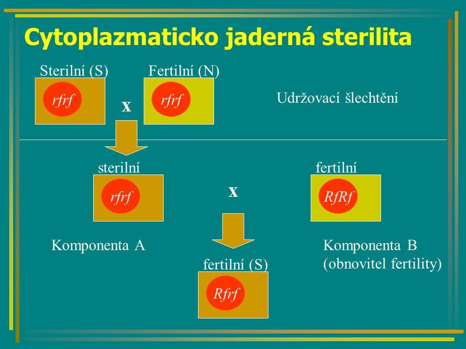 Cytoplazmaticko jaderná sterilita rfrf Sterilní (S)Fertilní (N) x rfrf sterilní x RfRf fertilní Rfrf fertilní (S) Komponenta AKomponenta B (obnovitel fertility) Udržovací šlechtění