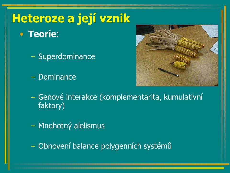 Heteroze a její vznik Teorie: –Superdominance –Dominance –Genové interakce (komplementarita, kumulativní faktory) –Mnohotný alelismus –Obnovení balanc