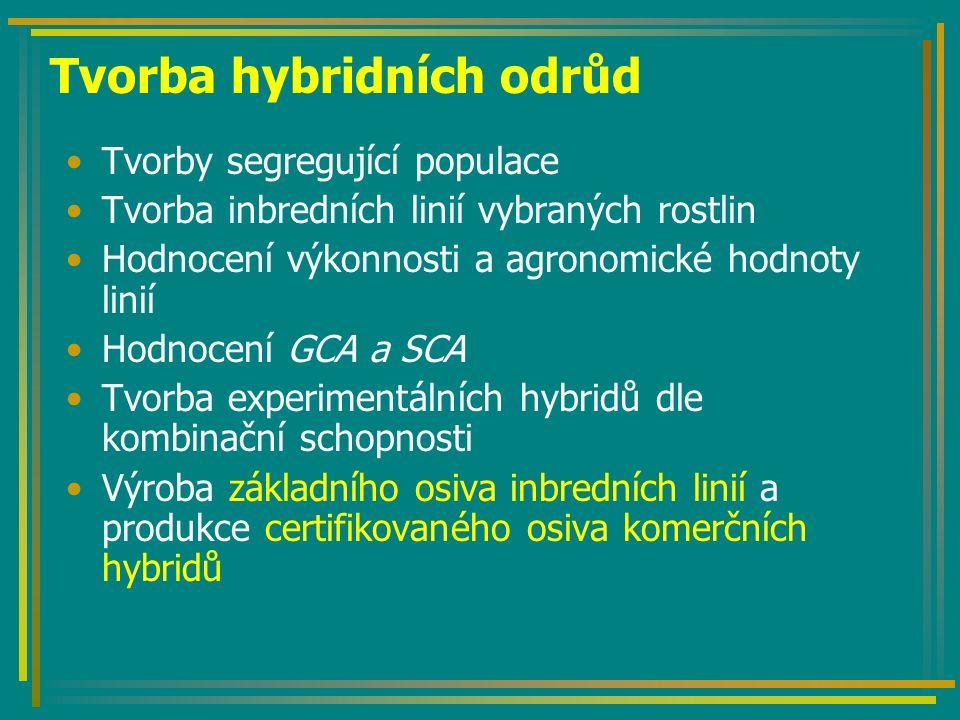 Tvorba hybridních odrůd Tvorby segregující populace Tvorba inbredních linií vybraných rostlin Hodnocení výkonnosti a agronomické hodnoty linií Hodnocení GCA a SCA Tvorba experimentálních hybridů dle kombinační schopnosti Výroba základního osiva inbredních linií a produkce certifikovaného osiva komerčních hybridů
