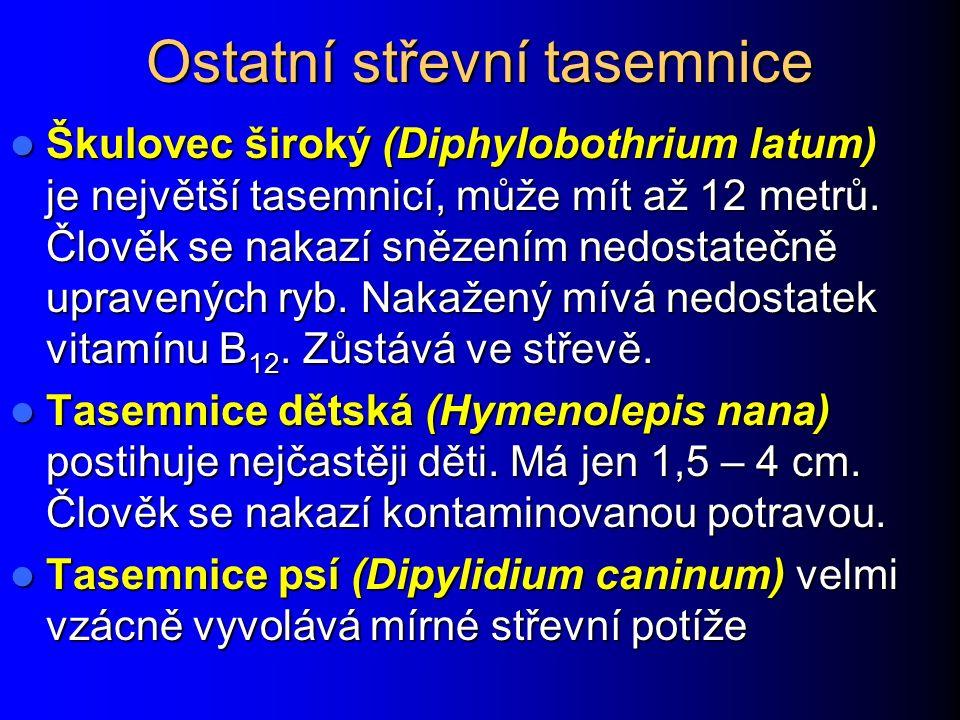 """Článek tasemnice bezbranné (dlouhočlenná by měla méně větví) Obrázky převzaty z CD-ROM """"Parasite- Tutor"""" – Department of Laboratory Medicine, Universi"""